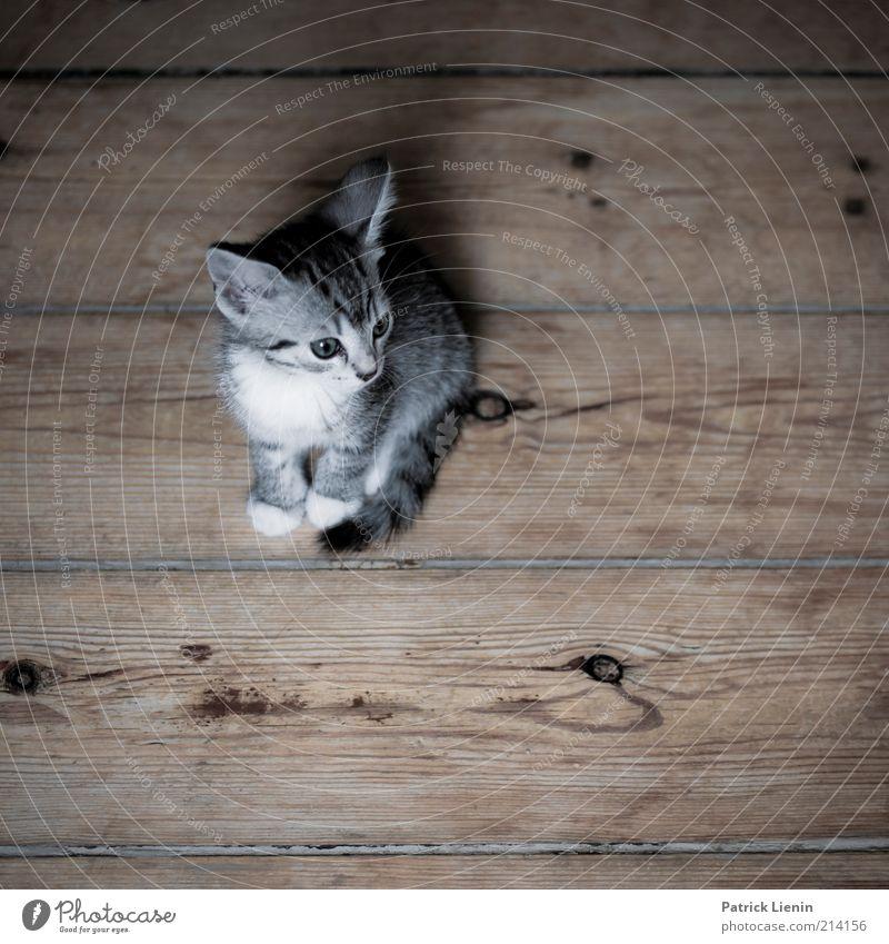 Katzenleben Tier Haustier 1 beobachten Denken entdecken genießen hocken Blick träumen warten frech Freundlichkeit Glück schön klein natürlich Stimmung Freude