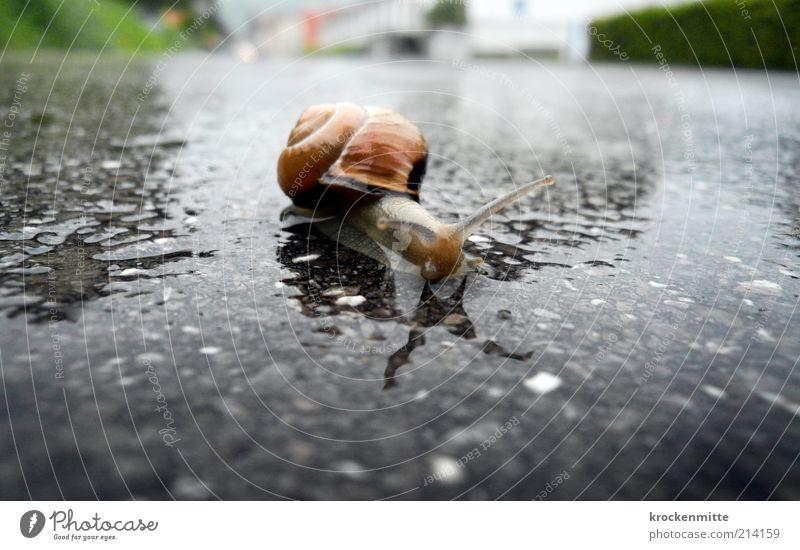 von 0 auf 400 grün Einsamkeit Tier Straße Bewegung grau Straßenverkehr Umwelt nass Verkehr bedrohlich Asphalt Wildtier Froschperspektive Detailaufnahme