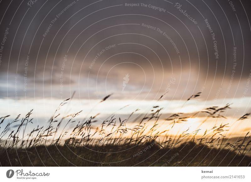 Gräser im Wind. harmonisch Wohlgefühl Zufriedenheit Sinnesorgane Erholung ruhig Freizeit & Hobby Sommer Umwelt Natur Pflanze Himmel Wolken Gewitterwolken Wetter