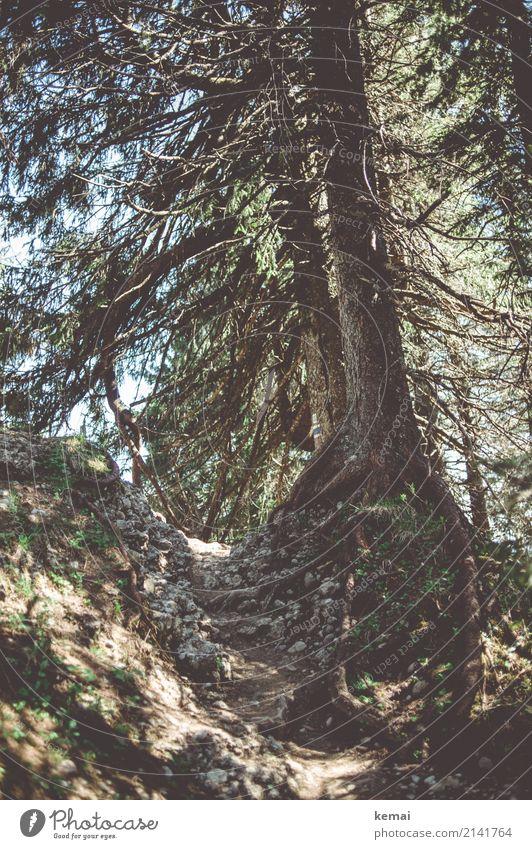 Der Weg Wohlgefühl Zufriedenheit Erholung ruhig Freizeit & Hobby Ferien & Urlaub & Reisen Ausflug Abenteuer Freiheit Berge u. Gebirge wandern Umwelt Natur