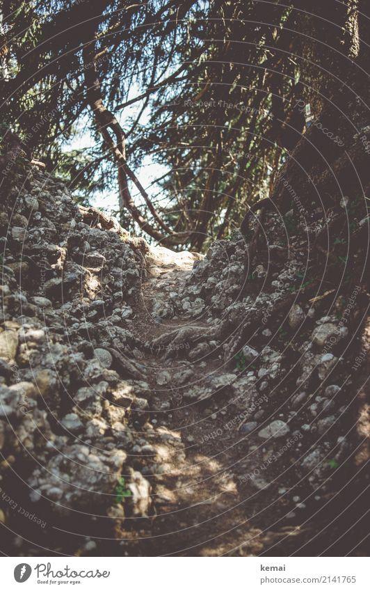 Steiniger Pfad Natur Ferien & Urlaub & Reisen Sommer Pflanze Baum ruhig Berge u. Gebirge dunkel Umwelt Wege & Pfade Freiheit Felsen Ausflug Freizeit & Hobby