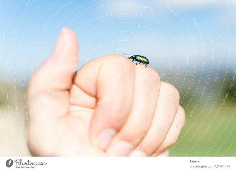 Grüner Käfer Mensch Natur Sommer schön Hand Tier ruhig Freundschaft Freizeit & Hobby Zufriedenheit hell wandern glänzend Wildtier sitzen authentisch