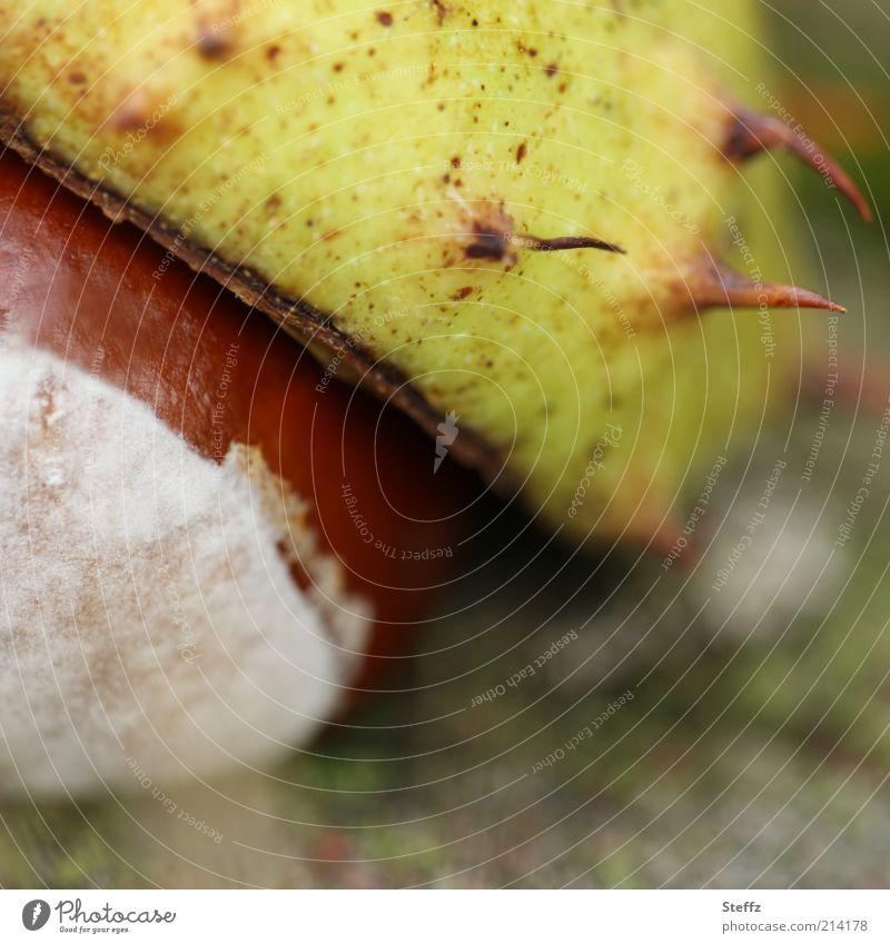 herbstliche Kastanie Rosskastanie Herbststimmung Kastanien Stachel Kastanienschale Herbstfärbung Herbstbeginn herbstliche Farben Bastelmaterial Sammlung