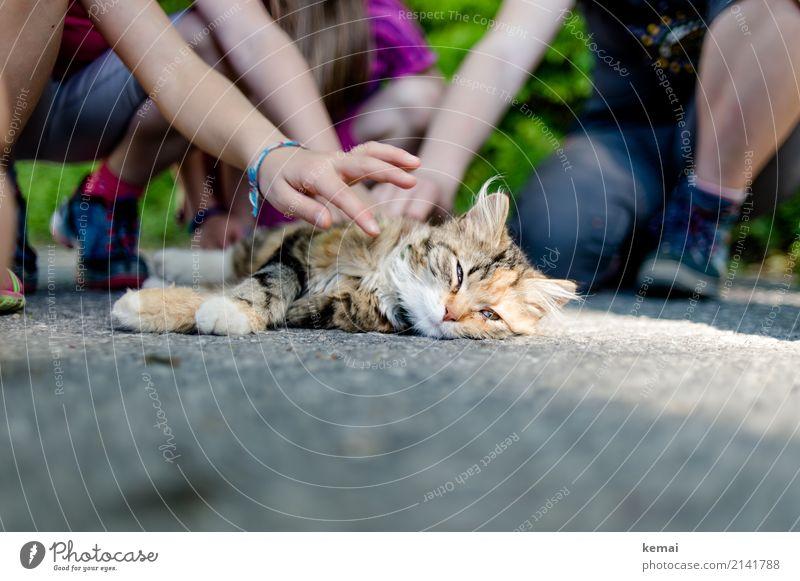 Schweigen und genießen Katze Kind schön Erholung Tier ruhig Wärme Leben Spielen Freundschaft Freizeit & Hobby Zufriedenheit liegen authentisch Abenteuer