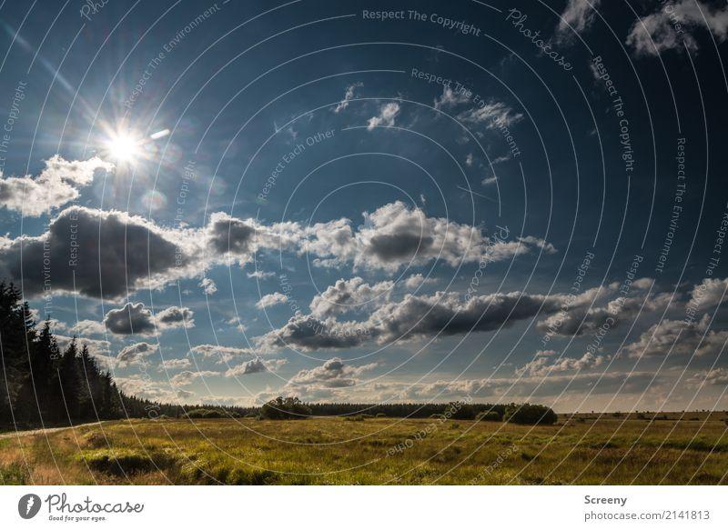 Ab nach Hause... Himmel Natur Ferien & Urlaub & Reisen Pflanze Sommer Sonne Landschaft Wolken ruhig Ferne Wald Wege & Pfade Tourismus Ausflug wandern Abenteuer