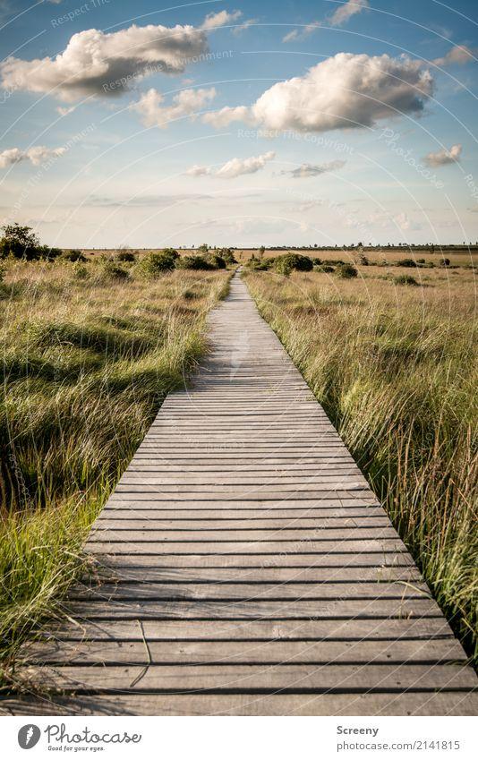 Langer Weg bis nach Hause... Himmel Natur Ferien & Urlaub & Reisen Pflanze Sommer Sonne Landschaft Wolken ruhig Ferne Wege & Pfade Gras Freiheit Tourismus