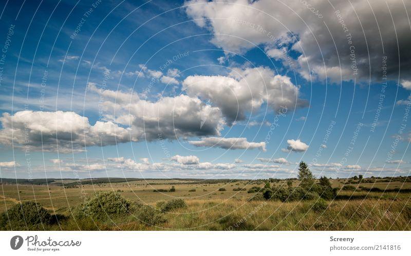 Weite Ferien & Urlaub & Reisen Tourismus Ausflug Abenteuer Ferne Freiheit Sommer Sonne wandern Natur Landschaft Pflanze Himmel Wolken Schönes Wetter Wiese Moor