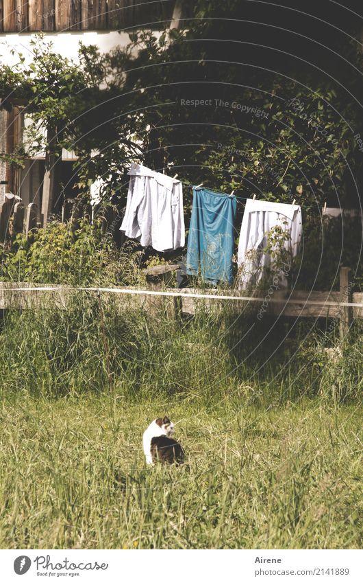 Katzenwäsche Tier Haus Wiese Garten Fassade Häusliches Leben Zufriedenheit Idylle warten Zaun ländlich trocknen Haushalt Wäsche Wäscheleine