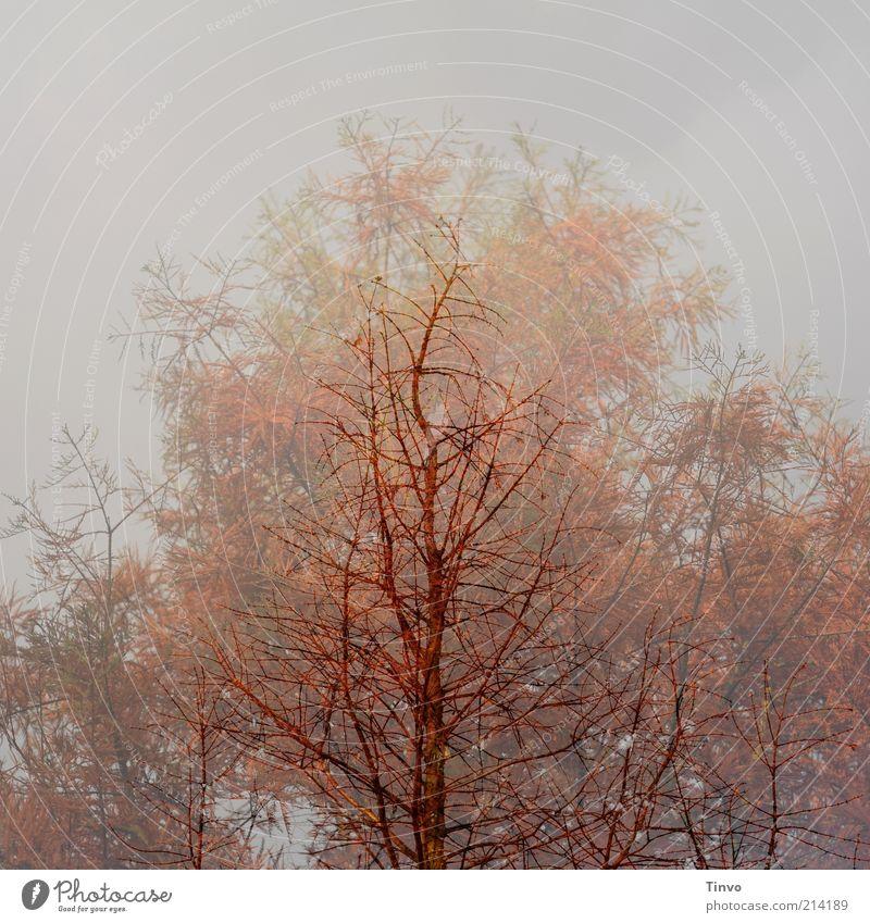Zeitgeist Natur Baum Pflanze rot Winter Herbst braun Wandel & Veränderung Jahreszeiten Doppelbelichtung kahl Zweige u. Äste geisterhaft