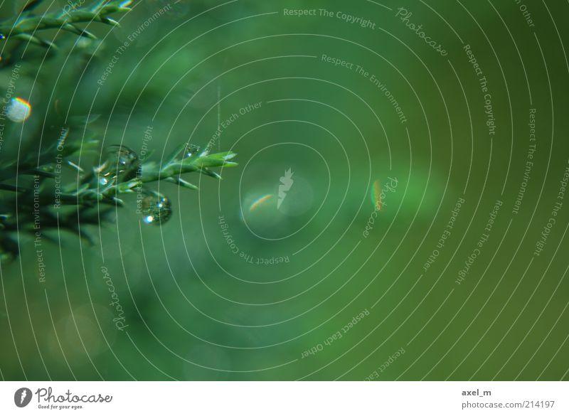 Wassertropfen 4 Pflanze Sonnenlicht Sommer Sträucher nass natürlich grün Natur ruhig Umwelt Farbfoto Außenaufnahme Makroaufnahme Menschenleer