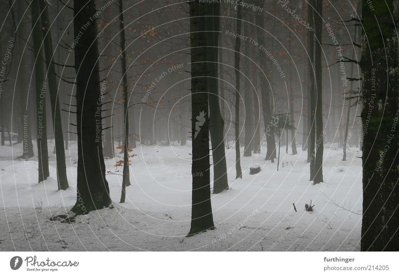 winterwald Umwelt Natur Landschaft Pflanze Urelemente Winter Wetter schlechtes Wetter Nebel Eis Frost Schnee Baum Wald Holz schwarz weiß Stimmung