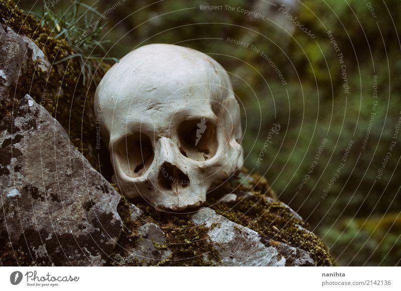 Menschlicher Schädel in der Natur alt grün weiß Umwelt natürlich Tod grau Felsen Angst wild authentisch Kultur Todesangst gruselig