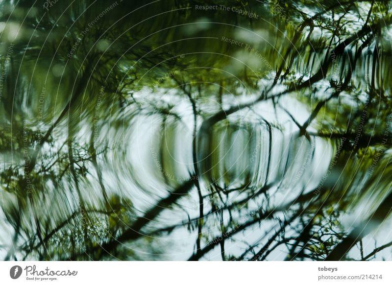 ..... Pflanze Baum Sträucher Grünpflanze Wildpflanze Wellen Flussufer Farbfoto Außenaufnahme Reflexion & Spiegelung grün weiß hell Ast Zweig Unschärfe