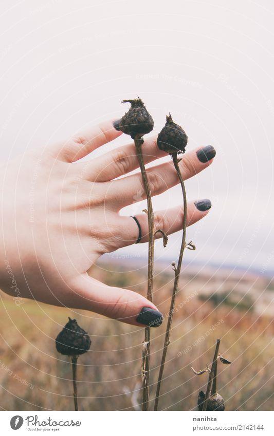 Rührende getrocknete Pläne der Hand in der Natur Mensch Himmel Jugendliche Pflanze Junge Frau Wolken 18-30 Jahre Erwachsene Leben Umwelt Herbst Senior natürlich