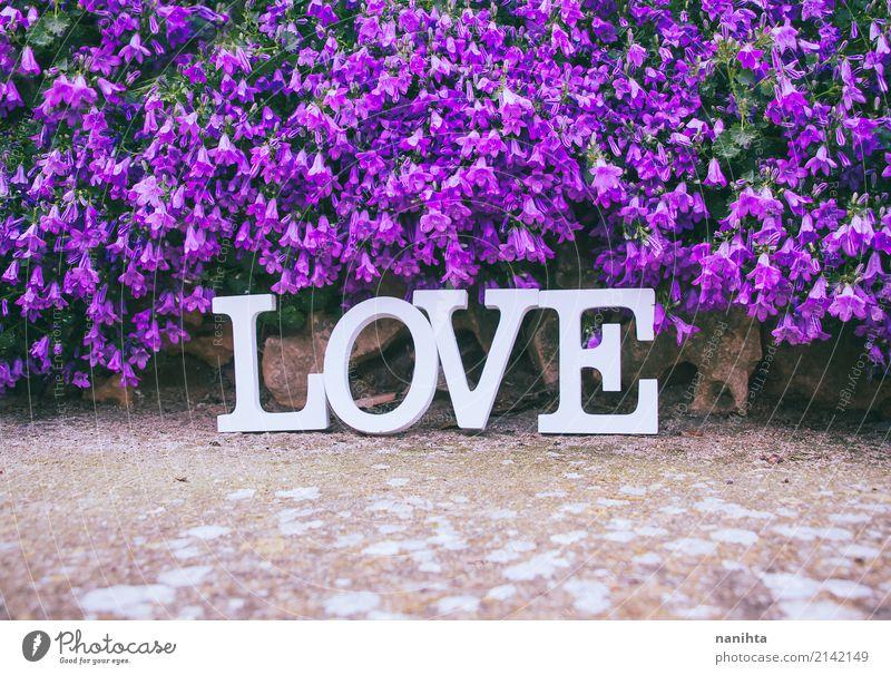 Wort Liebe und viele lila Blumen Feste & Feiern Valentinstag Muttertag Hochzeit Natur Frühling Sommer Grünpflanze Dekoration & Verzierung Stein Zeichen