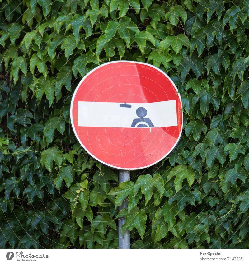 Driverseat Pflanze Grünpflanze Mauer Wand Verkehrszeichen Graffiti lustig grün rot Kletterpflanzen Einbahnstraße Straßenkunst Verkehrszeichenkunst Klebespuren