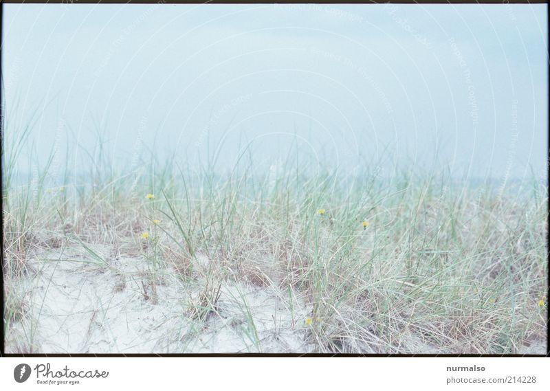 hauchdünner Meermorgen Natur Pflanze Ferien & Urlaub & Reisen Sommer Meer ruhig Ferne Umwelt Landschaft Stimmung natürlich ästhetisch Stranddüne Düne Ostsee horizontal