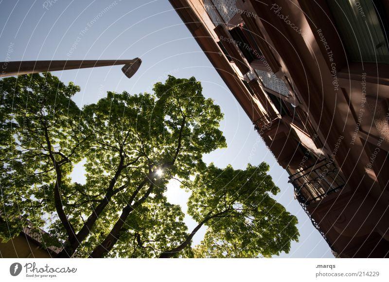 Always the Sun schön Baum Stadt Haus Erholung Gebäude groß Fassade Lifestyle Macht Häusliches Leben leuchten Laterne Schönes Wetter Baumkrone Blauer Himmel