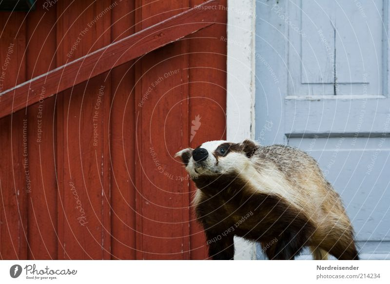 Hier wache ich weiß blau rot Haus Tier Holz Tür Fassade bedrohlich Schutz beobachten Wildtier Jagd Eingang Symbole & Metaphern skurril