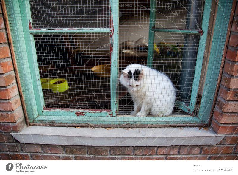 Chinesische Glückskatze? grün weiß rot Tier Einsamkeit Fenster Wand Katze Mauer Traurigkeit sitzen offen Armut Sehnsucht Asien Backstein