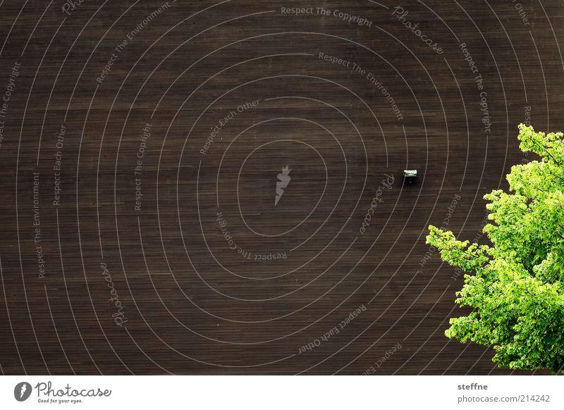 [H10.1] gut Holz Natur schön Baum grün Pflanze Sommer Wand Frühling Mauer braun Fassade Schönes Wetter