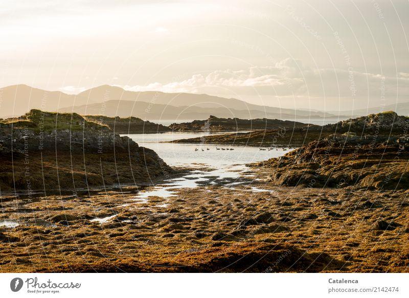 Gänse Himmel Natur Sommer Wasser Landschaft Berge u. Gebirge schwarz Umwelt grau Schwimmen & Baden braun Vogel Stimmung orange Felsen glänzend