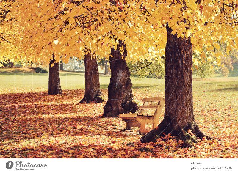 Ausruhen Natur Baum Erholung Einsamkeit ruhig gelb Herbst Senior Glück Zufriedenheit Park leuchten gold Schönes Wetter Lebensfreude Vergänglichkeit