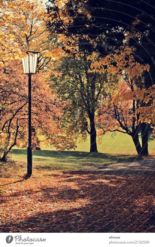 Parkgeflüster Umwelt Pflanze Herbst Schönes Wetter Baum Herbstlaub Laubbaum leuchten Freundlichkeit hell natürlich braun gelb gold Glück Lebensfreude Romantik