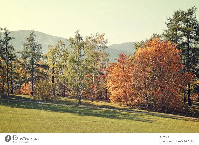 Herbstfarben Landschaft Baum Herbstlaub Laubbaum Nadelbaum Hügel Park Wiese leuchten ästhetisch Freundlichkeit hell nachhaltig mehrfarbig Glück Zufriedenheit