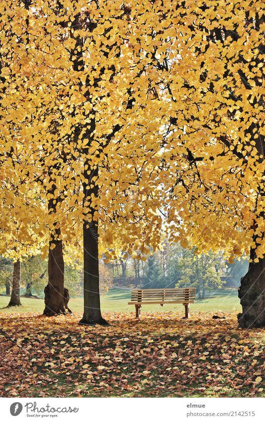 Parkbank Natur Pflanze Herbst Baum Linde Lindenblatt Baumstamm Herbstlaub leuchten blond Duft gelb gold Gefühle Glück Zufriedenheit Lebensfreude Geborgenheit
