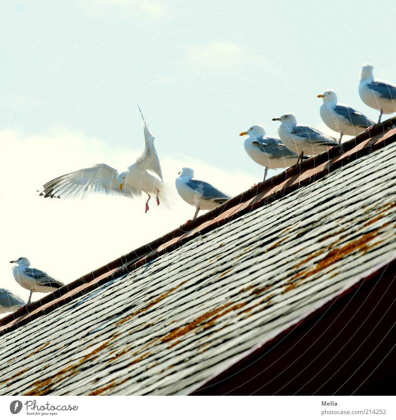 Landeplatz Himmel Tier Leben Bewegung Linie Freundschaft Vogel Zusammensein lustig fliegen sitzen Dach Flügel Tiergruppe Reihe diagonal
