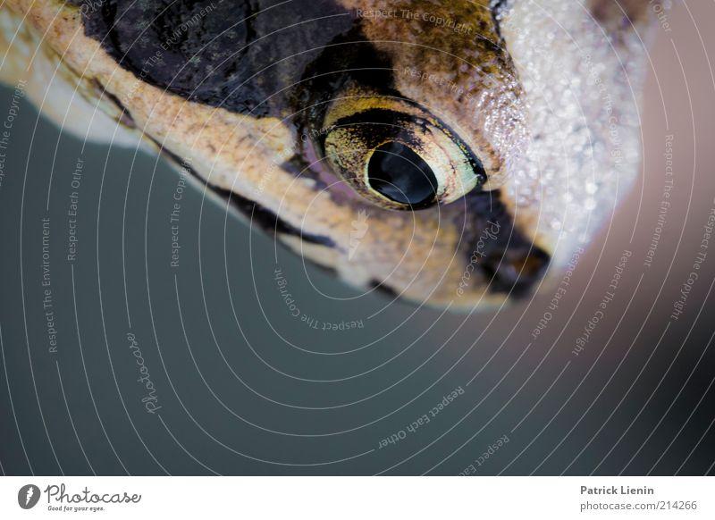 Froschkönig Natur Tier Traurigkeit Angst glänzend Umwelt bedrohlich beobachten außergewöhnlich festhalten entdecken leuchten Wildtier Makroaufnahme genießen