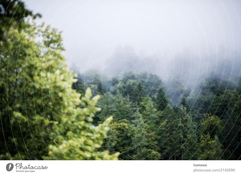 Wald im Nebel Natur Baum Hallstadt Österreich Europa Dorf grün weiß Weltkulturerbe Salzkammergut Bundesland Oberösterreich Farbfoto Nebelstimmung Blätter