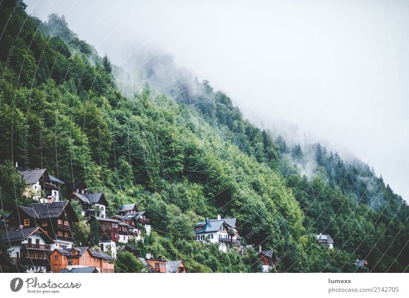 harmony Natur grün weiß Baum Wald Nebel Europa Dorf Österreich Weltkulturerbe Salzkammergut Hallstadt Bundesland Oberösterreich