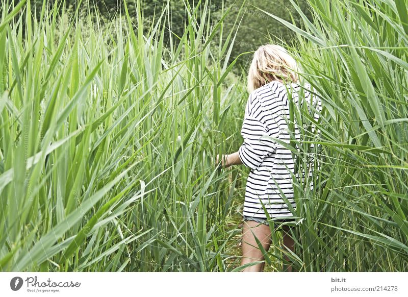 Im Schilf Mensch Kind Natur Jugendliche Sommer Freude ruhig Einsamkeit Erholung feminin Gras Glück Beine Park Zufriedenheit blond