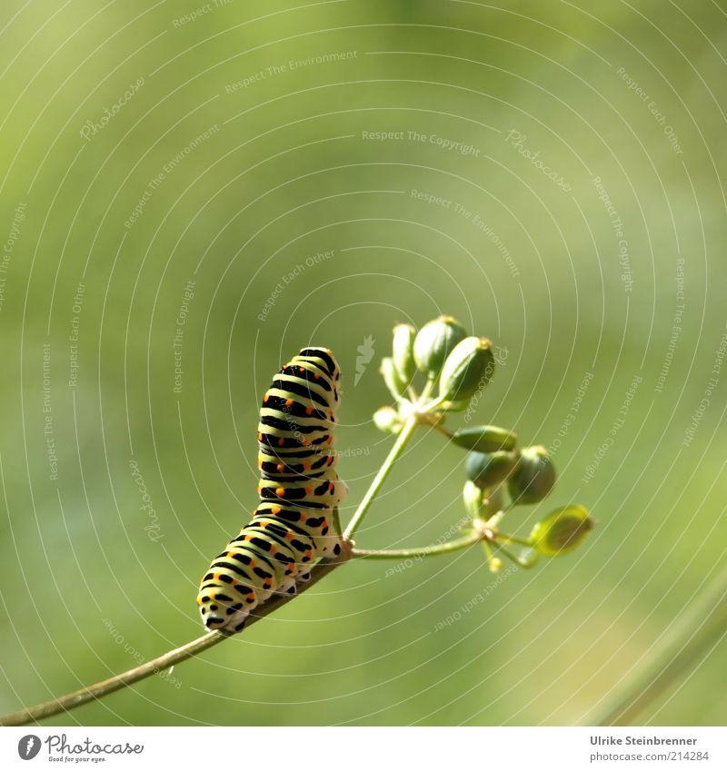 Sonnengruß grün Pflanze Bewegung klein Tierfuß Hintergrundbild Wachstum Körperhaltung außergewöhnlich Stengel dick beweglich Umweltschutz vertikal Entwicklung