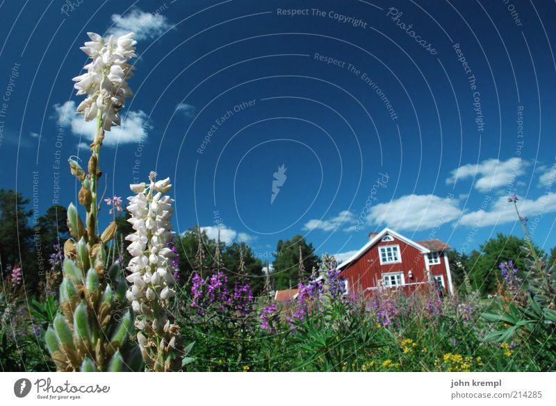 zwei Himmel Natur Pflanze blau grün schön Sommer weiß Erholung Blume rot Wolken Haus Umwelt Wiese natürlich