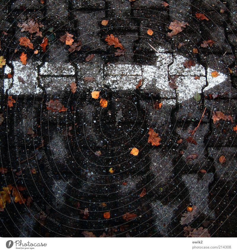 Autorität Umwelt Pflanze Herbst Blatt Wege & Pfade Stein Zeichen Pfeil eckig einfach dünn Spitze weiß Farbstoff Richtung richtungweisend gerade rechts