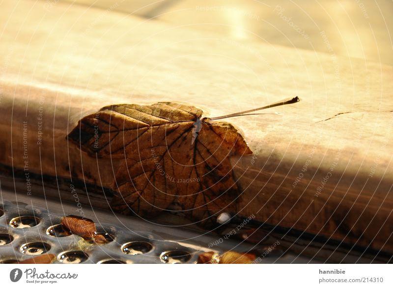 leaf (me) alone Blatt Platz braun Wien Herbst herbstlich Brunnen Verfall nass Farbfoto mehrfarbig Außenaufnahme Nahaufnahme Menschenleer Textfreiraum oben Tag
