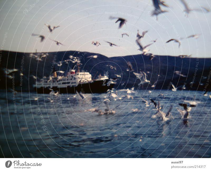 Suspense Natur Himmel Meer See Landschaft Wasserfahrzeug Vogel fliegen Flügel Hügel Schifffahrt Spannung Möwe Fähre Angriff Schwarm