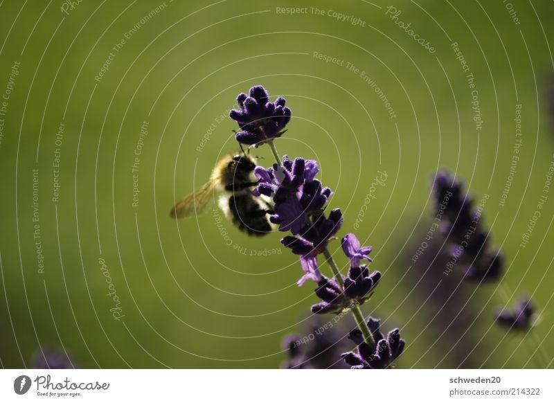 working day Natur Pflanze grün Sommer Sonne Blume Tier Umwelt Wärme Blüte Wiese Arbeit & Erwerbstätigkeit Flügel Klima Lebensfreude beobachten