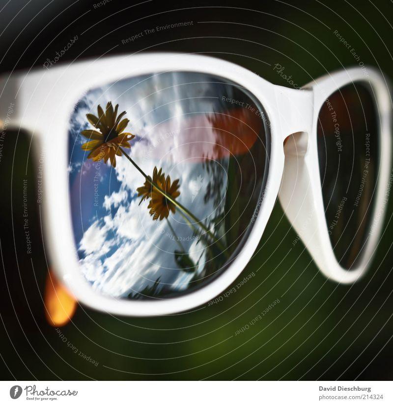 Der Sommer kommt und geht... Natur blau weiß grün Pflanze Blume Wolken schwarz gelb Frühling Perspektive Brille Sonnenbrille Spiegelbild Accessoire
