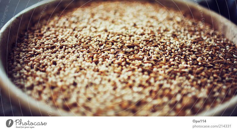 Auch ein blindes Huhn findet ein Korn (oder mehrere!) gelb grau braun gold fest Bioprodukte füttern Gerste