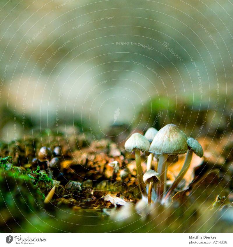 Pilze Natur alt schön Umwelt hell braun Erde ästhetisch Urelemente einzigartig Moos Waldboden Pilzhut Kontrast bräunlich