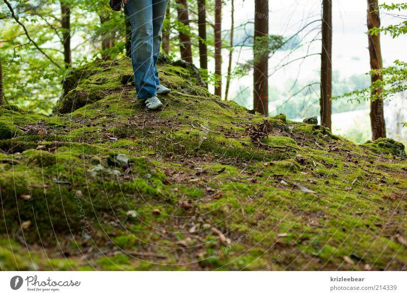 Natur Pflanze Erholung Umwelt Moos Froschperspektive