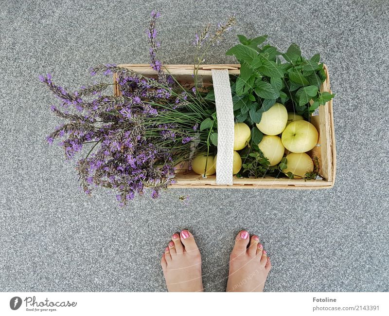 Eigene Ernte Mensch feminin Frau Erwachsene Fuß 1 Umwelt Natur Pflanze Sommer Blume Blatt Blüte Nutzpflanze Garten hell nah natürlich grün violett Lavendel