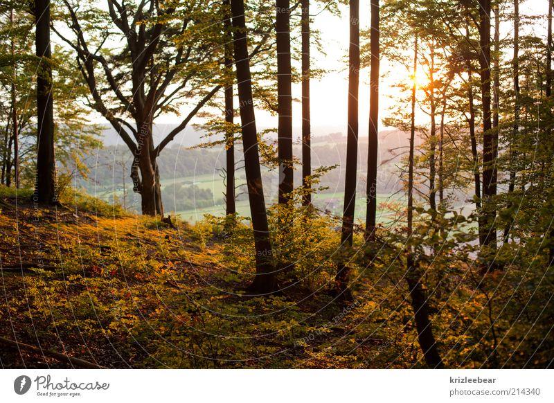 Zauberwald Natur Herbst Schönes Wetter Wald alt Freude Farbfoto Außenaufnahme Abend Zentralperspektive