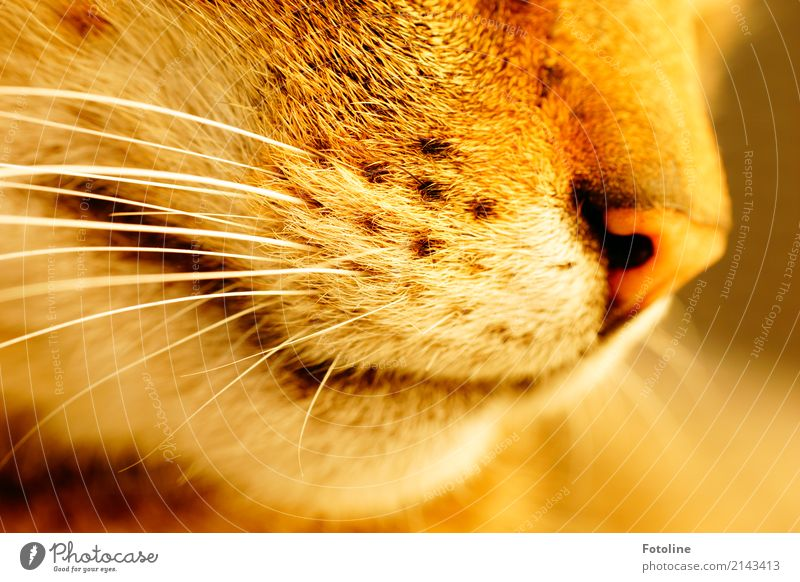 Schnurrrrrrrrrr! Katze Natur weiß Tier Umwelt natürlich braun weich Nase Punkt nah Haustier Fell Tiergesicht Schnauze Schnurrhaar