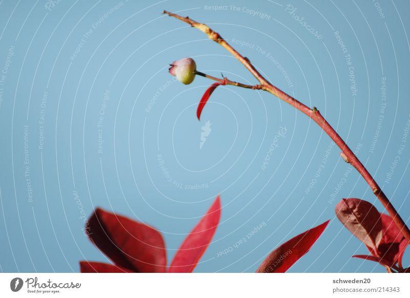 Richtung Sonne Natur Himmel Blume blau Pflanze rot Sommer Blatt Herbst Blüte Frühling Wetter Umwelt geschlossen ästhetisch