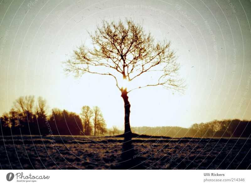 winterwärme Natur Baum Sonne Winter ruhig kalt Wiese Freiheit Landschaft Erde Ast analog trocken Sonnenuntergang Sonnenaufgang